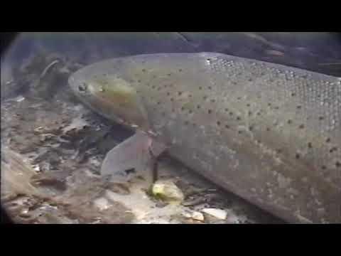 Celebrating World Fish Migration Day - YouTube