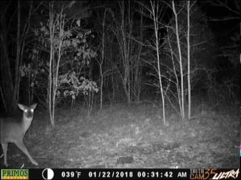 Deer nervous about the Tropy Rock and Camera