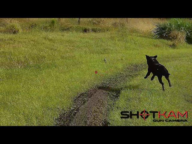 ShotKam: Quail Hunting