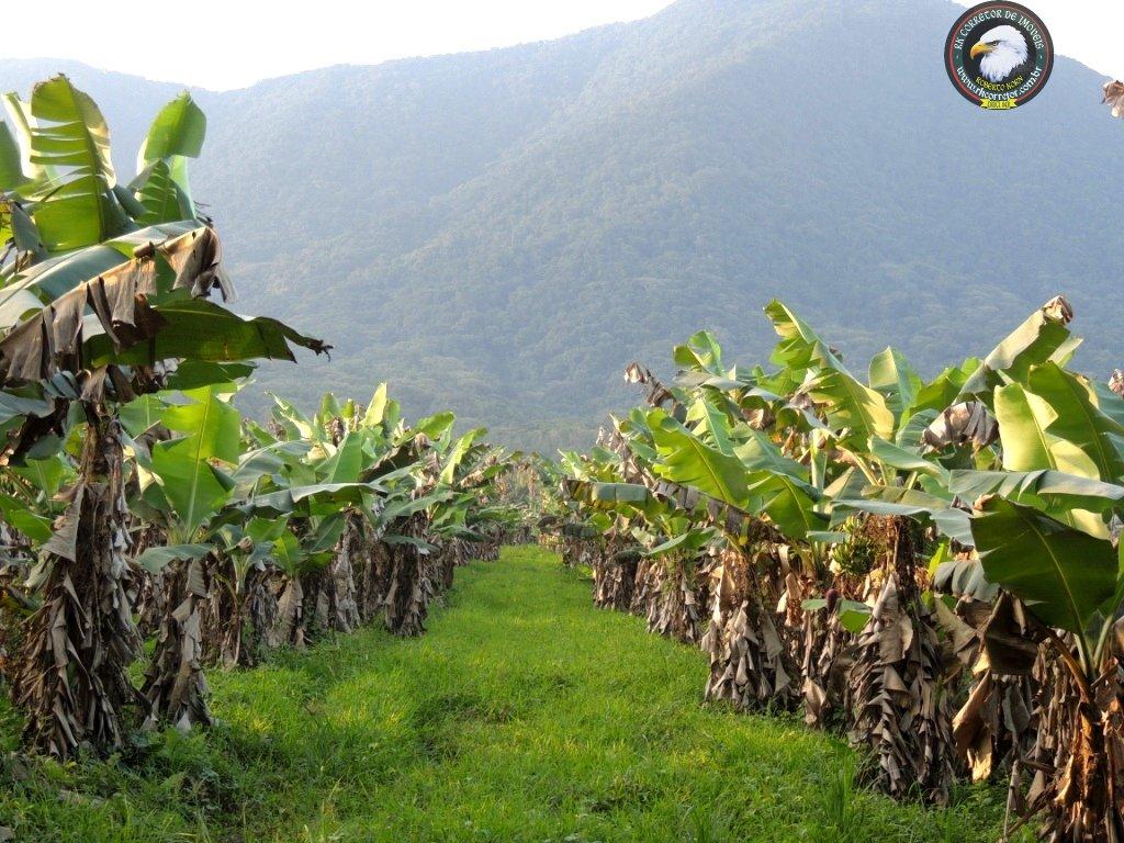 Fazenda/sítio/chácara/haras à venda  no Pirabeiraba (Dona Francisca) - Joinville, SC. Imóveis