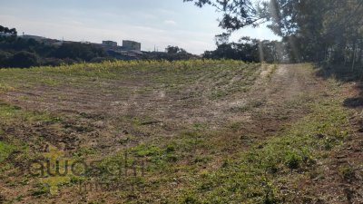Terreno na Campina da Barra, Araucária - PR