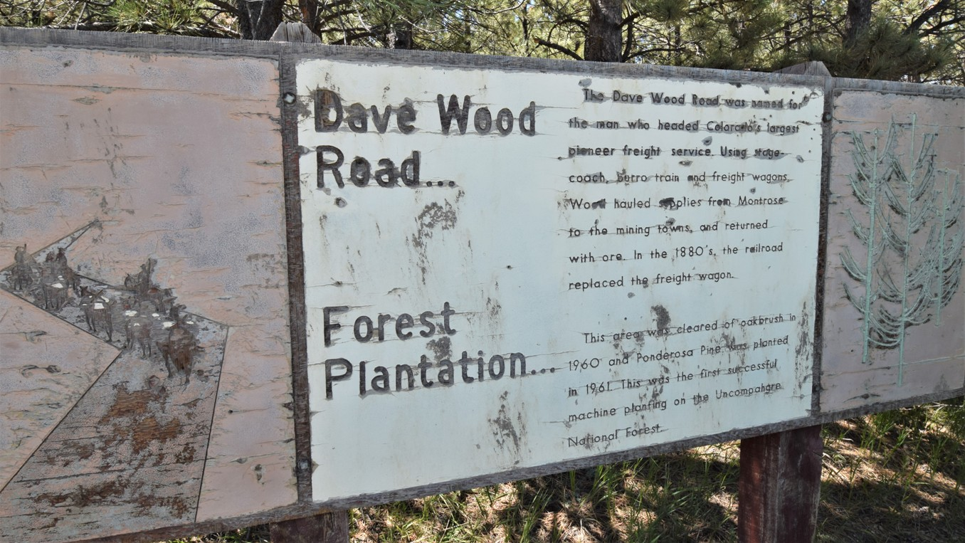 Highlight: Dave Wood Trail