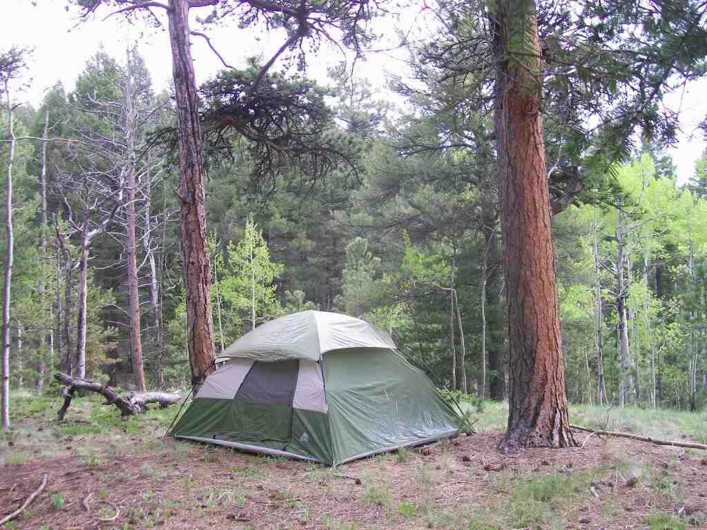 Camping: Mount Herman Road