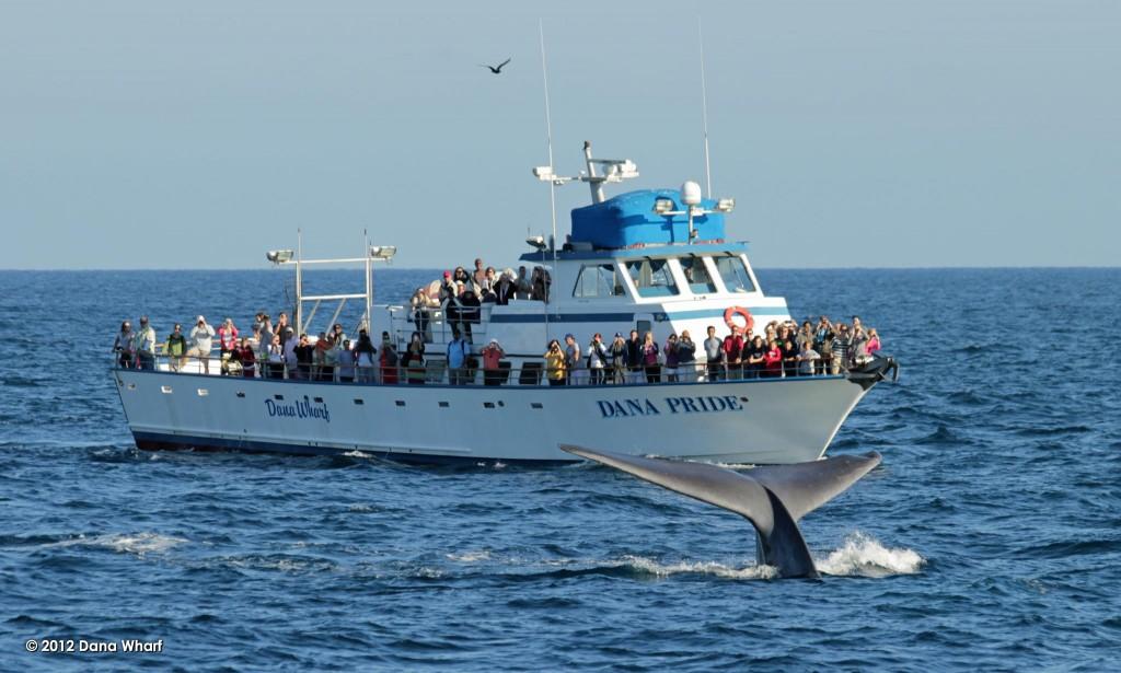 Dana Wharf Sportfishing & Whale Watching