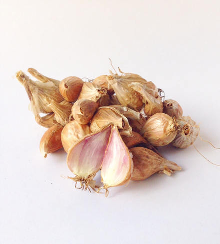 French Grey Shallots