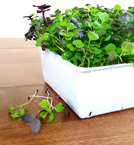 Organic Live Microgreens