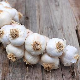 The Garlic Grove LLC