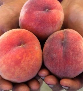 Freestone Yellow Peaches