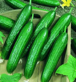 Amiga cucumber -