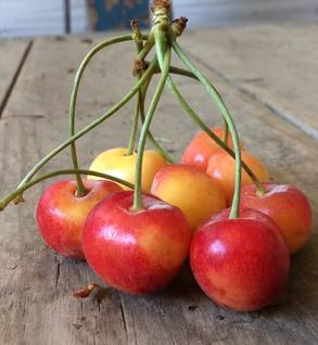 Cherries, Rainier