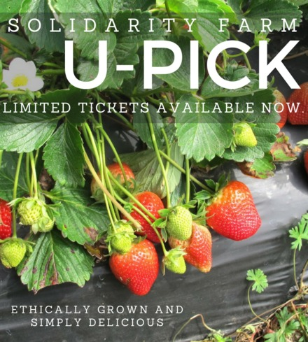 Strawberry U-Pick