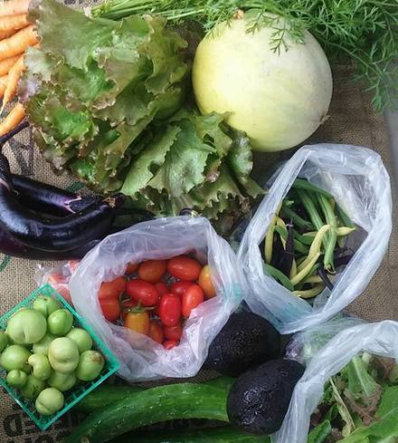 Small Farm Box (Fallbrook)