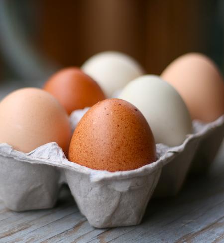 Eggs-regular