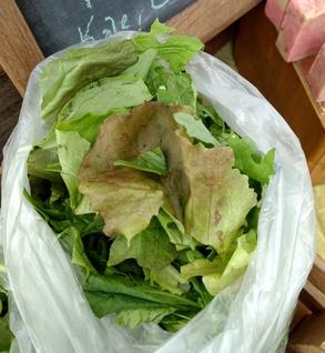 Electric Salad Mix