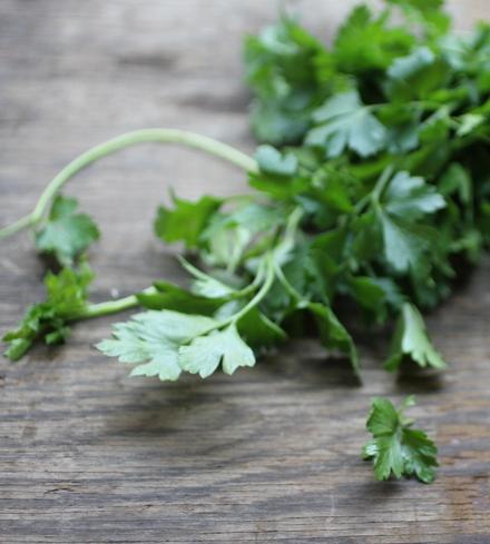 Fresh Organic Cilantro