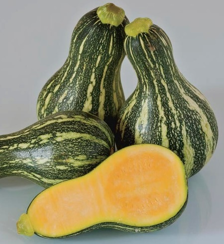 Heirloom Cushaw