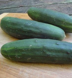 Marketmore Cucumbers