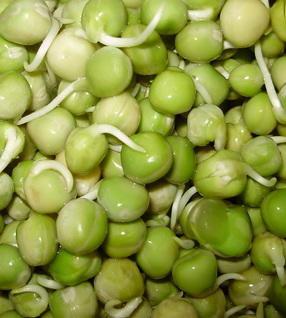 Organic Sprouted Peas