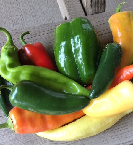 Peppers, Large Mild