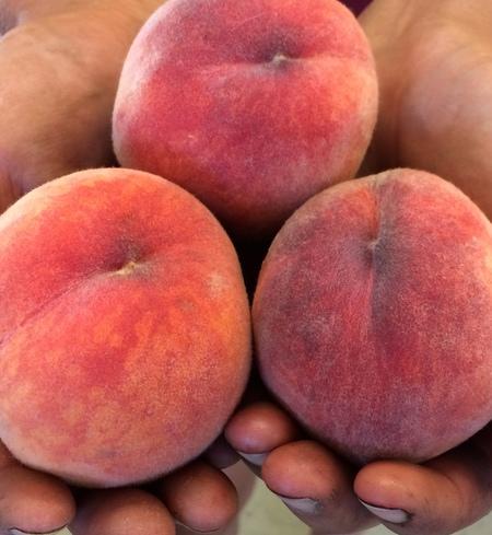 Peaches, Yellow