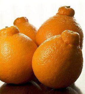 Tangeloes
