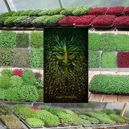 Greenman microgreens