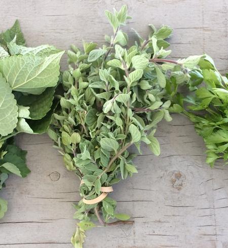 Herb, oregano