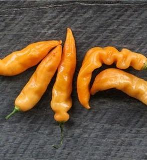 Sugar Rush Peach Peppers