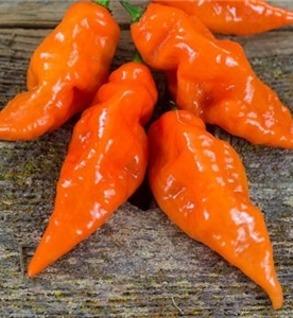 Habanada Peppers