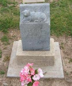 NORTON, DELPHIA F - Baca County, Colorado | DELPHIA F NORTON - Colorado Gravestone Photos
