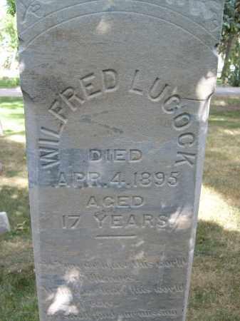 LUCOCK, WILFRED - Boulder County, Colorado | WILFRED LUCOCK - Colorado Gravestone Photos