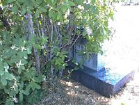 PAINTER, BERTHA MORLAN - La Plata County, Colorado | BERTHA MORLAN PAINTER - Colorado Gravestone Photos