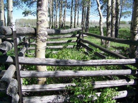 DART (FAMOUS), ISOM - Moffat County, Colorado | ISOM DART (FAMOUS) - Colorado Gravestone Photos