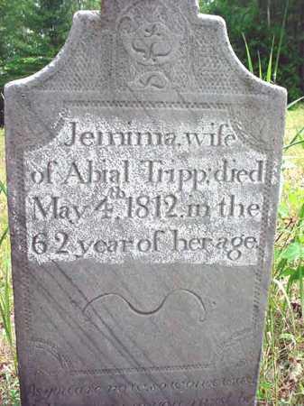 TRIPP, JEMIMA - Essex County, New York | JEMIMA TRIPP - New York Gravestone Photos