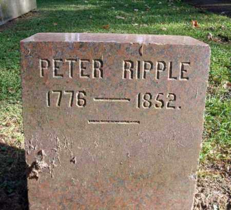 RIPPLE, PETER - Montgomery County, New York | PETER RIPPLE - New York Gravestone Photos