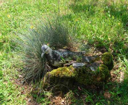 VIEW, BLAINE CEMETERY - Tillamook County, Oregon | BLAINE CEMETERY VIEW - Oregon Gravestone Photos