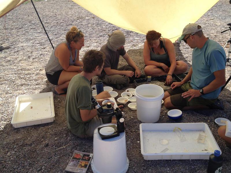Marine Biology Field Studies - Photo by Kelly Muller