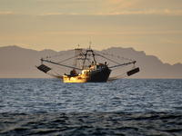 Shrimp Trawler - Photo by Maria Johnson