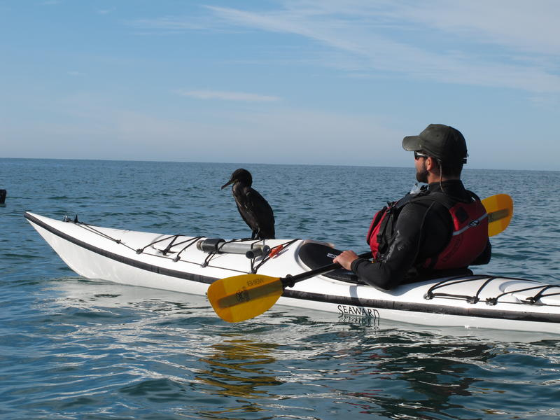 Student Kayaking with Cormorant  - Photo by Kino Bay Center
