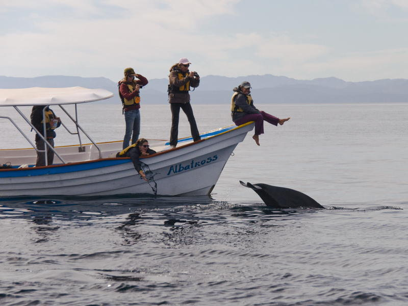 Marine Studies Course with Dolphin
