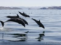 Family of Bottlenose Dolphin - Photo by Hector Pérez Puig