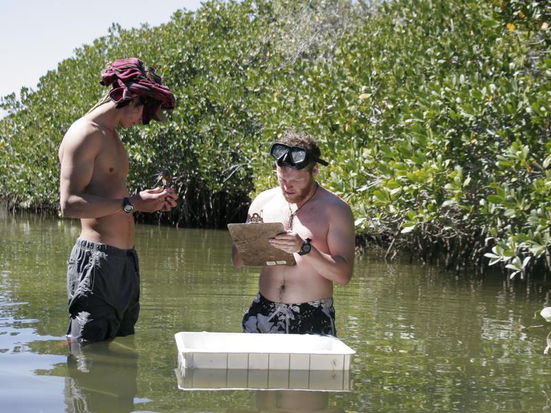 Making notes in the mangrove