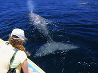 Up close and personal with a whale - Photo by Naomi Blinick