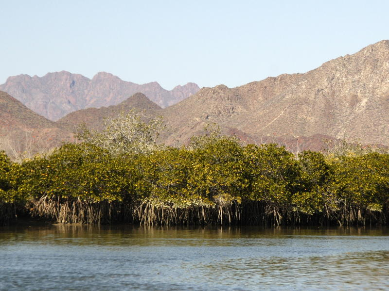 Mangroves and mountains