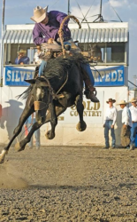 images.raceentry.com/infopages/shelby-county-cattlemens-rodeo-infopages-12487.png