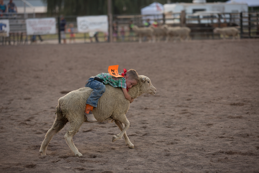 images.raceentry.com/infopages1/little-cowboy-rodeo-infopages1-12531.png