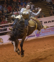 images.raceentry.com/infopages1/nacogdoches-pro-rodeo-and-steer-show-infopages1-12478.png