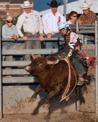 images.raceentry.com/infopages1/roughrider-days-rodeo-infopages1-12488.png