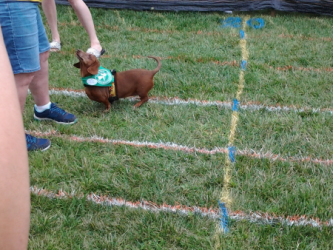 images.raceentry.com/infopages1/sunset-doxie-derby-infopages1-4499.png
