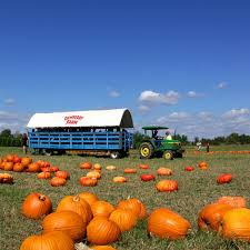images.raceentry.com/infopages1/the-pumpkin-patch-run-mainstay-farm-infopages1-52586.png